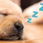 夜勤明けで寝れない人の睡眠対策